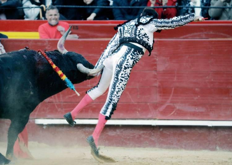 Que viva el Toro !!!!!! El Torero tuvo que abandonar la faena